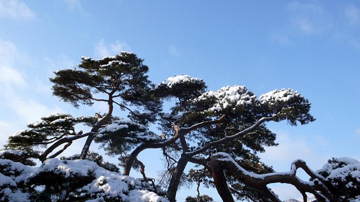 pine_b_02.JPG