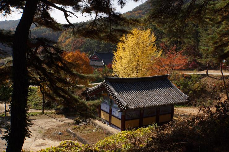fall_1_08.JPG